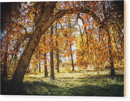 Fall In Laguna Wood Print