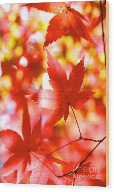 Fall In Love Again Wood Print