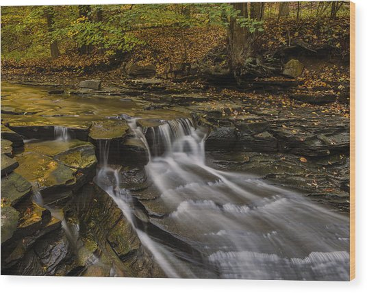 Fall In The Metroparks Wood Print