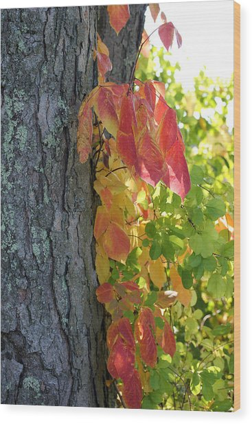Fall In The Orchard Wood Print by Mary Bedy
