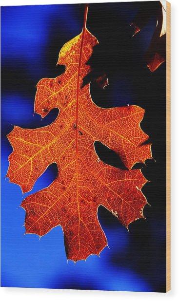 Fall Leaf Closeup Wood Print