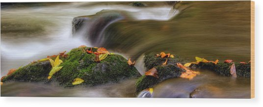 Fall Leaves On Mossy Rocks Wood Print by Greg Mimbs