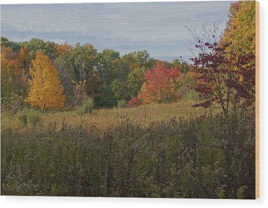Fall Meadow Wood Print by Doug Hubbard