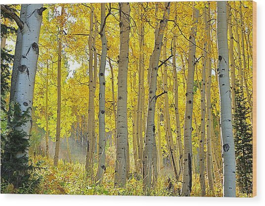 Fall Morning Shine Wood Print