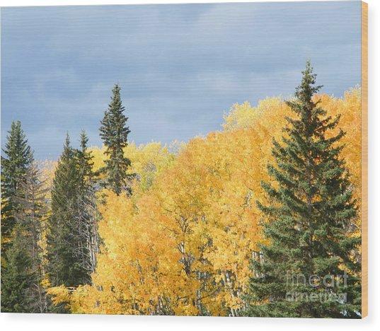 Wood Print featuring the photograph Fall Near Ya Ha Tinda by Ann E Robson