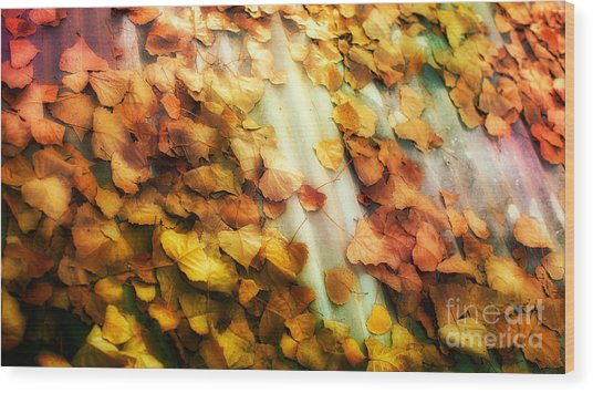 Fall On The Roof Wood Print by Bobbi Feasel