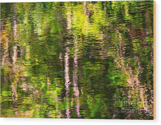 The Harz National Park Wood Print