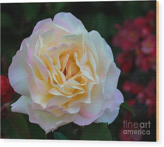 Fall Rose Bloom Wood Print