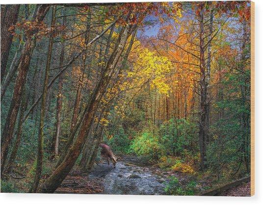 Fall Solitude Wood Print