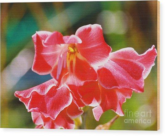Fall Sparkle Gladiola Wood Print by Cynthia Syracuse