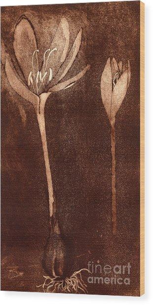 Fall Time - Autumn Crocus Meadow Safran Wood Print