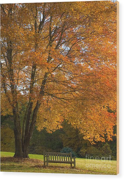 Fall Tree And Bench Wood Print