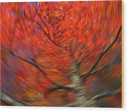 Fall Tree Carousel Wood Print