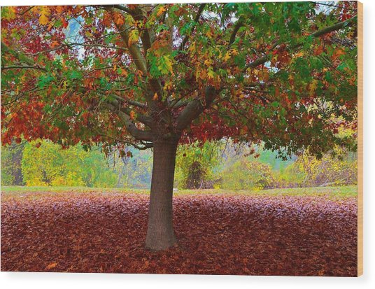Fall Tree View Wood Print
