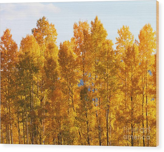 Fall Trees 8x10 Crop Wood Print