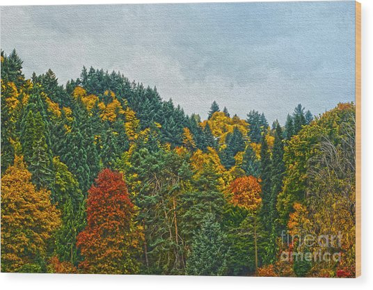 Fall Trees Wood Print by Nur Roy