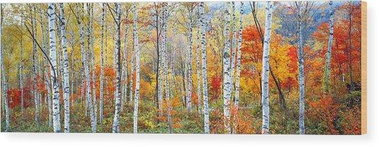 Fall Trees, Shinhodaka, Gifu, Japan Wood Print