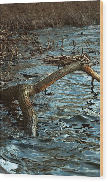 Fall Waters Wood Print by Mike Feraco