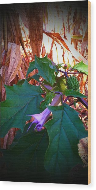 Fall Wild Flower Purple Bloom Wood Print by Brittany Perez