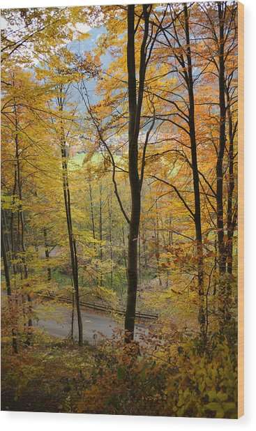 Fall Woods Wood Print by Marie Sullivan