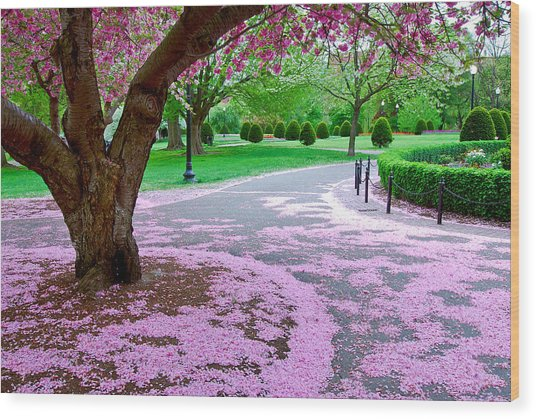 Fallen Blossoms Wood Print