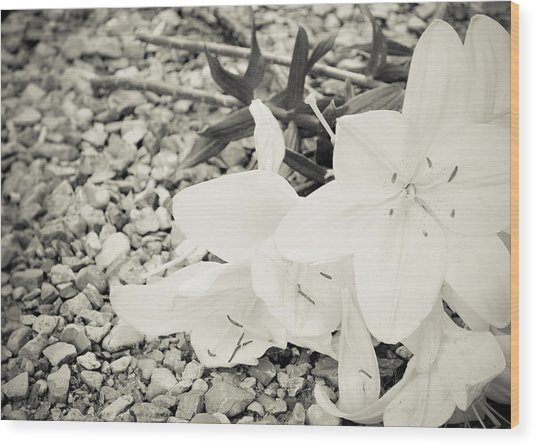 Fallen Bouquet Wood Print by BandC  Photography