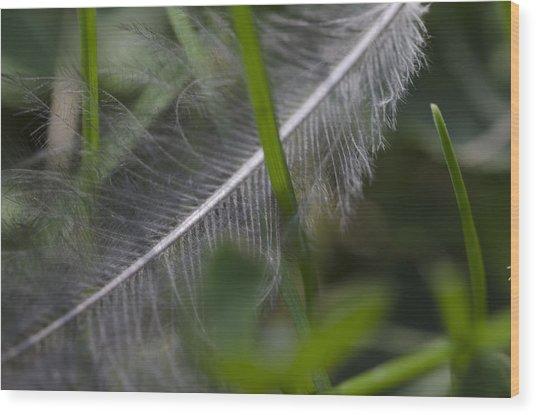 Fallen Feather Wood Print
