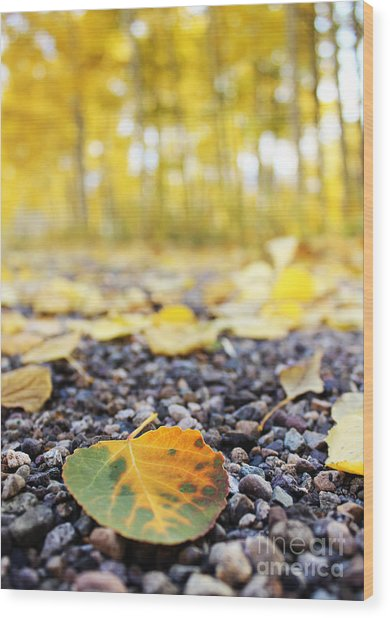 Wood Print featuring the photograph Fallen Leaf by Kate Avery
