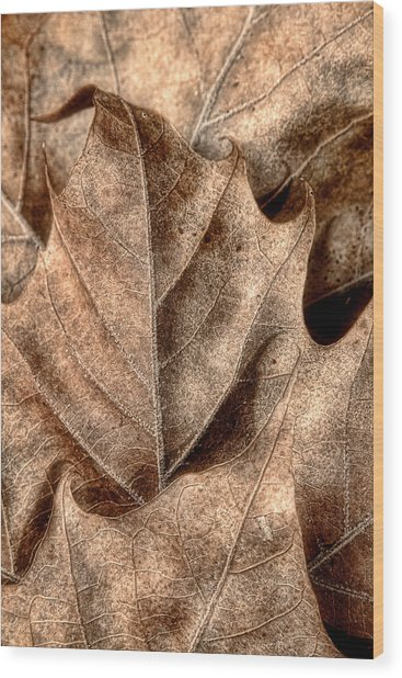 Fallen Leaves I Wood Print
