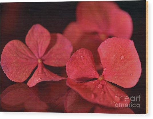 Fallen Petals Wood Print