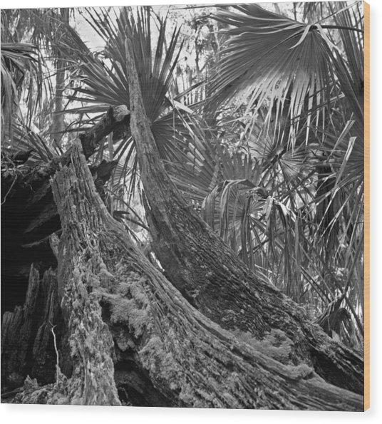 Fallen Tree. Highlands Hammock S.p. Wood Print