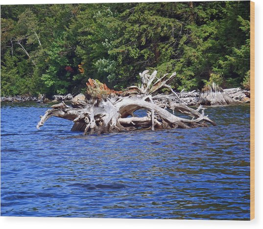 Fallen Tree In A Lake Wood Print