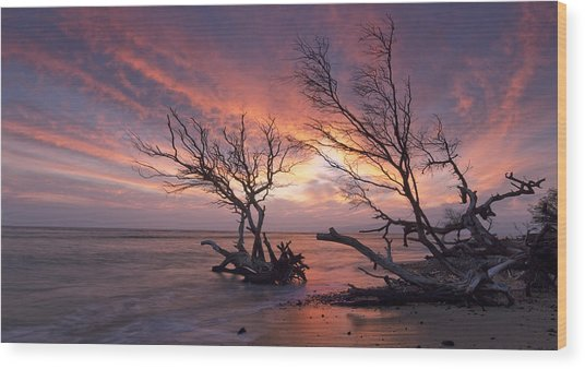 Fallen Trees Wood Print by James Roemmling