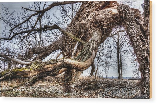 Fallen Twisted Giant Wood Print