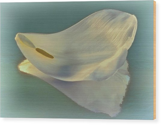 Fallen White Petal On Aqua Wood Print