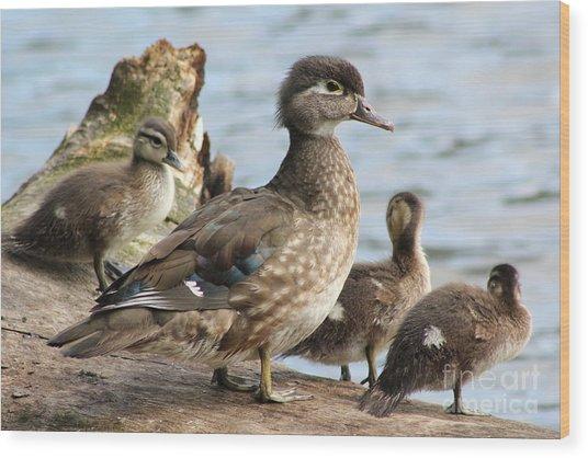 Family Of Ducks Wood Print by Michael Paskvan