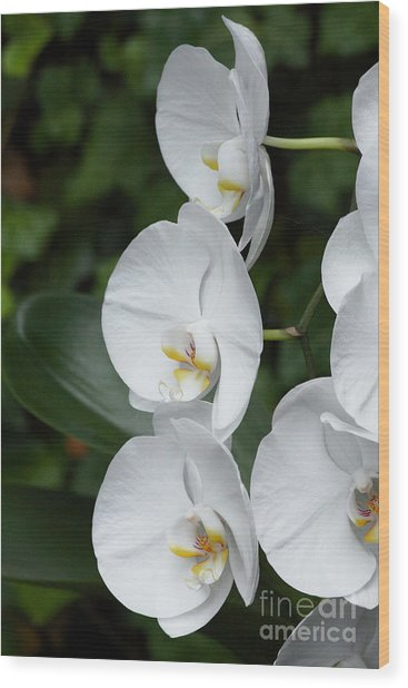 Fancy Orchid Wood Print