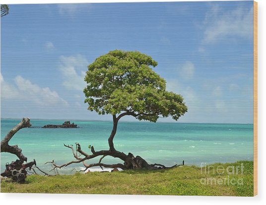 Fanning Tree On Beach Wood Print