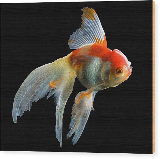 Fantail Goldfish Wood Print