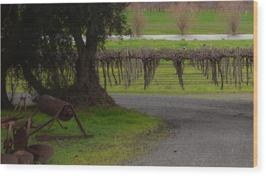 Farm And Vineyard Wood Print