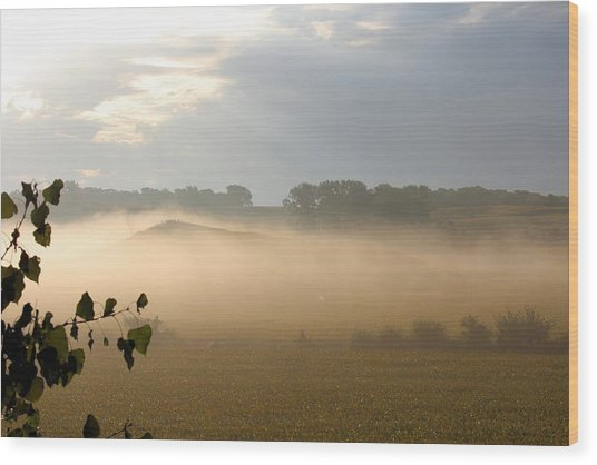 Farm Morning By Angieclementine Wood Print by Angie Phillips