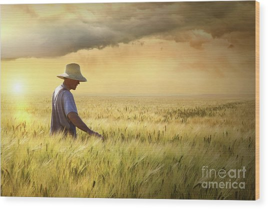 Farmer Checking His Crop Of Wheat  Wood Print