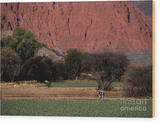 Farmer In Field In Northern Argentina Wood Print