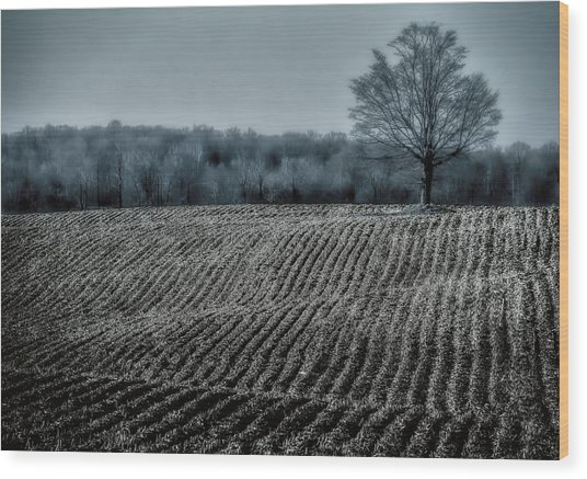 Farmfield Furrows Wood Print