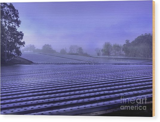 Farmland Wood Print
