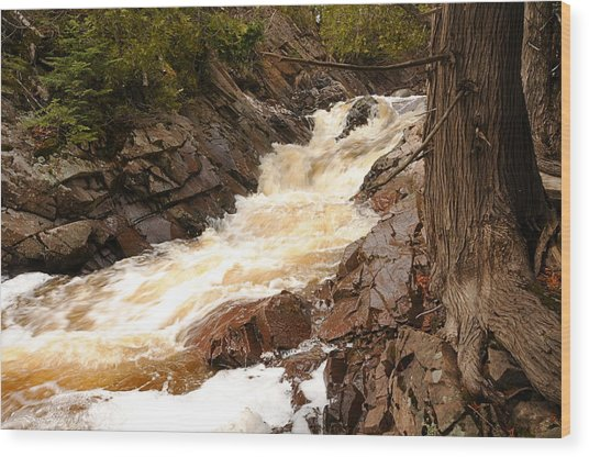 Fast Water And Cedars Wood Print by Sandra Updyke