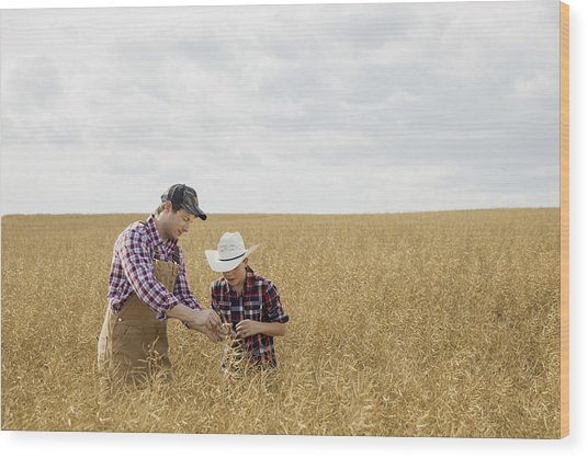 Father And Son Checking Wheat Crop Wood Print by Hero Images