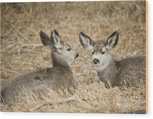 Fawns At Rest Wood Print by Bob Dowling