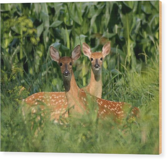 Fawns Crossed Wood Print