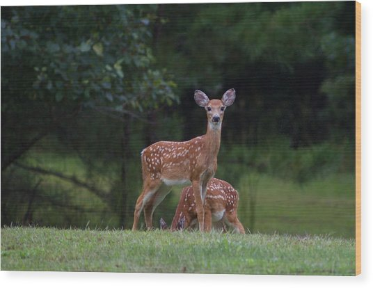 Fawns Wood Print